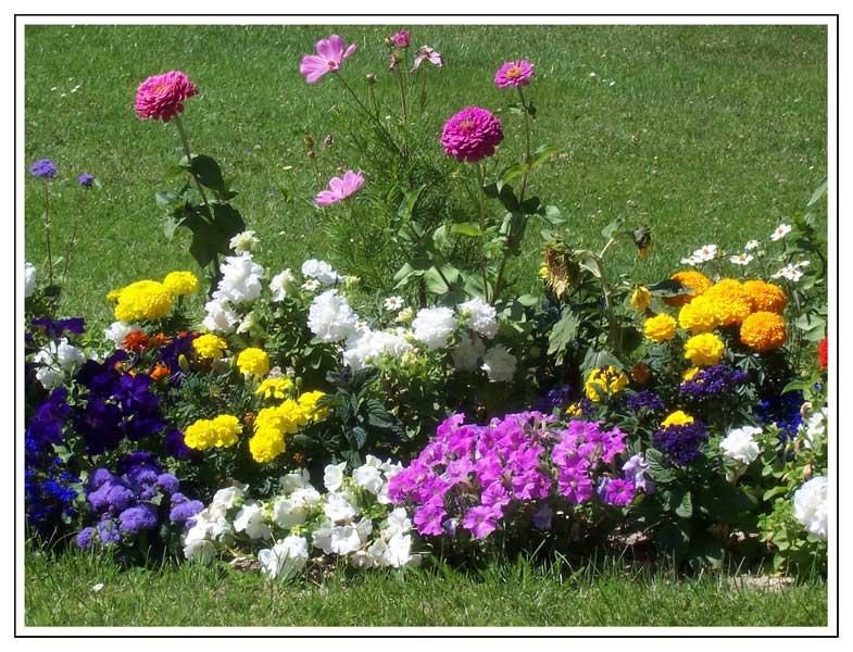 Jardines De Flores. Consejos Para Regar Un Jardin Con Flores With ...